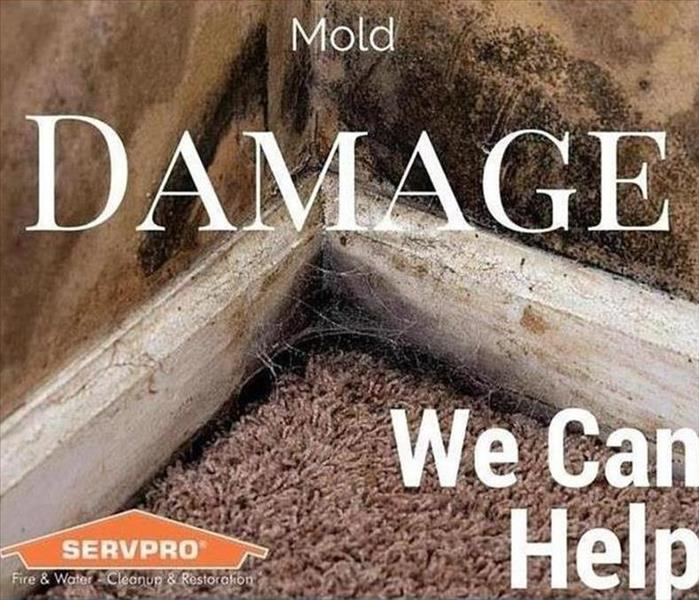 Building Services Five Things To Know About the Mold Remediation Process